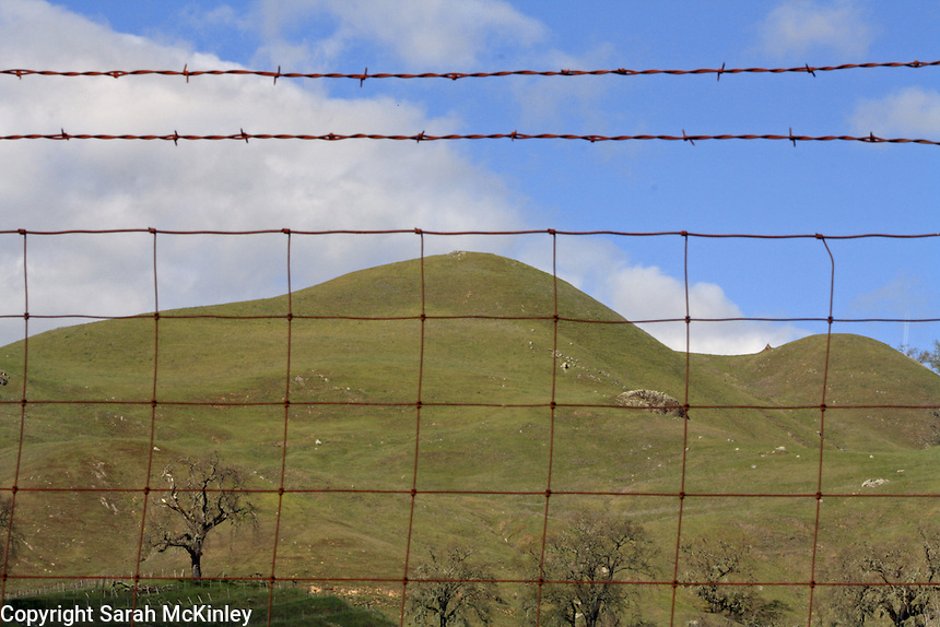 A hill, rising above a vineyard and oak trees, as viewed through a wire fence near Geyserville.