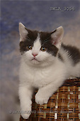Carl, ANIMALS, photos, kitten, basket(SWLA3056,#A#) Katzen, gatos