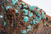 Aurichalcite, a blue-green  zinc copper carbonate mineral found in typical tufted needle-like crystal masses, almost as velvet-like encrustations, across a matrix of limonite. Mapimi, Mexico.