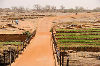 MALI,  Bandiagara, Dogonland, habitat of the ethnic group Dogon, irrigated fileds at small river
