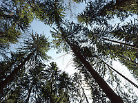FOREST_LOCATION_90202