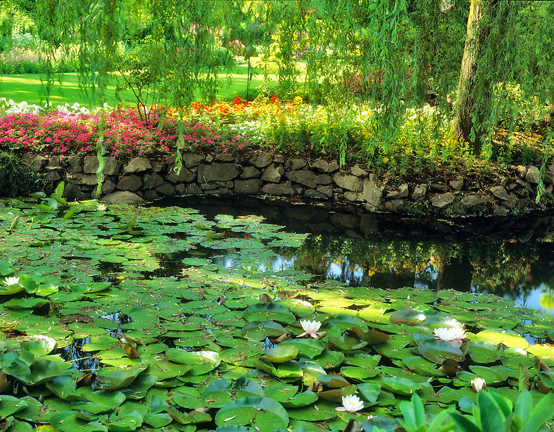 Lily pond. Butchart Gardens. Victoria, British Columbia, Canada.