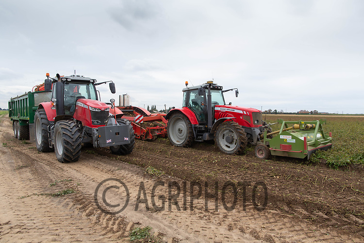 7.9.2020 Lifting main crop potatoes in the Lincolnshire Fens <br /> ©Tim Scrivener Photographer 07850 303986<br />      ....Covering Agriculture In The UK.