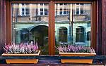 Odbicie w szybie, ulica Jagiellońska w Krakowie, Polska<br /> Reflection in the glass, Jagiellońska Street in Cracow, Poland