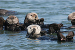 Sea otters for DS