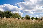 Europa, DEU, Deutschland, Nordrhein Westfalen, NRW, Rheinland, Niederrhein, Ruhrgebiet, Duisburg-Rheinhausen, Gras, Himmel, Wolkenstimmung, Cumuluswolken, Kategorien und Themen, Natur, Umwelt, Landschaft, Jahreszeiten, Stimmungen, Landschaftsfotografie, Landschaften, Landschaftsphoto, Landschaftsphotographie, Wetter, Himmel, Wolken, Wolkenkunde, Wetterbeobachtung, Wetterelemente, Wetterlage, Wetterkunde, Witterung, Witterungsbedingungen, Wettererscheinungen, Meteorologie, Bauernregeln, Wettervorhersage, Wolkenfotografie, Wetterphaenomene, Wolkenklassifikation, Wolkenbilder, Wolkenfoto....[Fuer die Nutzung gelten die jeweils gueltigen Allgemeinen Liefer-und Geschaeftsbedingungen. Nutzung nur gegen Verwendungsmeldung und Nachweis. Download der AGB unter http://www.image-box.com oder werden auf Anfrage zugesendet. Freigabe ist vorher erforderlich. Jede Nutzung des Fotos ist honorarpflichtig gemaess derzeit gueltiger MFM Liste - Kontakt, Uwe Schmid-Fotografie, Duisburg, Tel. (+49).2065.677997, ..archiv@image-box.com, www.image-box.com]