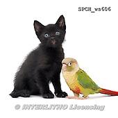 Xavier, ANIMALS, REALISTISCHE TIERE, ANIMALES REALISTICOS, FONDLESS, photos+++++,SPCHWS606,#A#