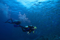 Schooling bigeye jacks, Caranx sexfasciatus, and divers (MR).  Palau, Micronesia.