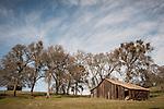 Barn and oaks, winter, Ellis Ranch, Calif.