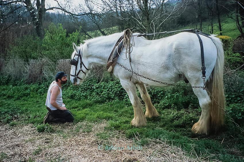 Simon & Sam the Shire horse   Tinker's Bubble, Low impact community,  Somerset