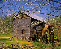 Spring Dogwood Blooms at Hagood Mill, near Pickens, South Carolina   Southern Appalachian foothills