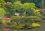 Seattle, WA<br /> Pine trees and island featured in the Japanese garden in the Washington Park Arboretum