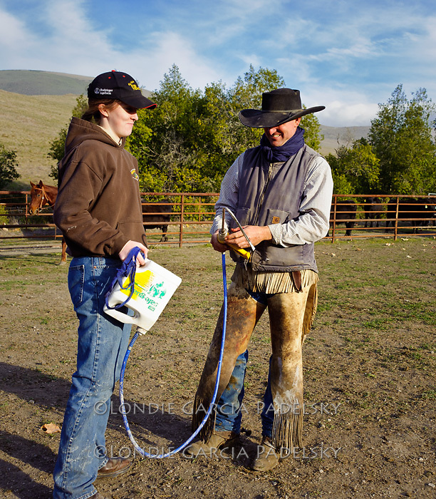 Arron(Animal Science teacher) shows a student how to use medicine equipment at a cattle roundup at the Escuela Ranch, San Luis Obispo, California