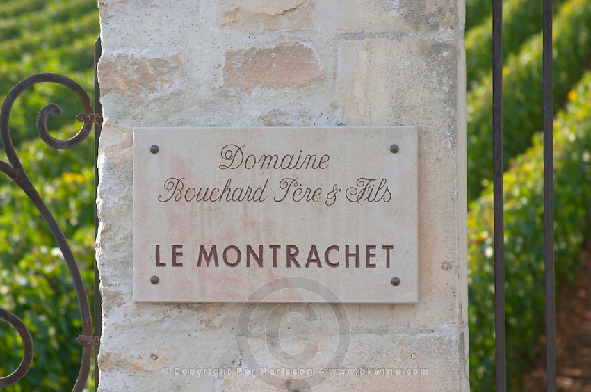 "Vineyard. Domaine Bouchard Pere et Fils. ""Le Montrachet"" Grand Cru, Puligny Montrachet, Cote de Beaune, d'Or, Burgundy, France"