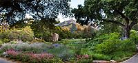Meadow panorama, California native plant, Santa Barbara Botanic Garden