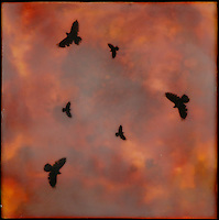Mixed media encaustic photo transfer by of crows in red orange sunset sky.