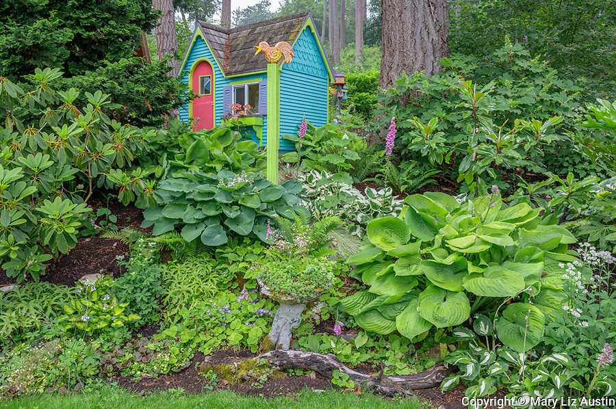 Vashon-Maury Island, WA: Colorful playhouse in woodland perennial garden with hostas, sedums; rhododendrons and hydrnangeas
