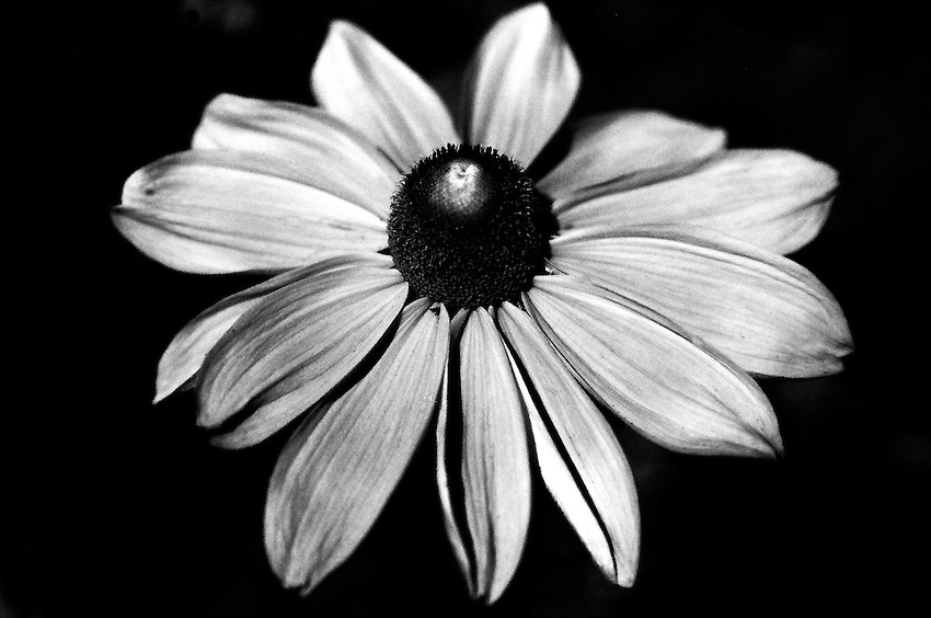 Flower, 35mm image on Ilford Delta film