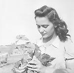 Libyen : Serie: 'italienische Kolonisten in Libyen' militaerische Kolonisierung der Cyrenaica Region: Portraet einer jungen italienischen 'Wehrbaeuerin' bei der Arbeit <br /> - 1942<br /> - Aufnahme: Steinhoff<br /> <br /> - Erschienen in: 'Berliner Illustrirte Zeitung' 33/1942<br /> <br /> Originalaufnahme im Archiv von ullstein bild<br /> <br /> - 01.01.1942-31.12.1942<br /> <br /> Libya : Series: 'Italian colonists in Libya' military colonization of the Cyrenaica region: portrait of a young italian woman living in the italian colony at work <br /> - 1942<br /> - Photographer: Steinhoff<br /> <br /> - Published by: 'Berliner Illustrirte Zeitung' 33/1942<br /> <br /> Vintage property of ullstein bild<br /> <br /> - 01.01.1942-31.12.1942