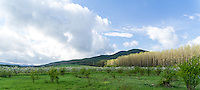Blossoming apple trees next to the forest in Hungary near to the Pilis mountains