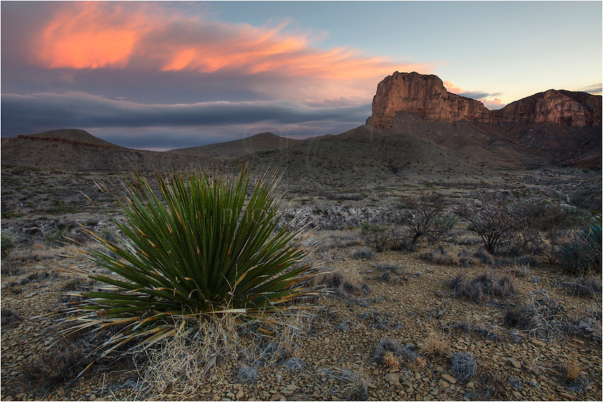 Rising from the Chihuahuan desert, El Capitan has long been a landmark for early travelers along the Butterfield Overland Stagecoach route. Just to the north of the iconic El Capitan stands the tallest point in Texas, Guadalupe Peak, at 8749 feet. <br />