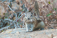 Chipmunk, Rocky Mountain National Park, Colorado