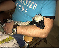 BNPS.co.uk (01202 558833)<br /> Pic: BlackNoseSheep/BNPS<br /> <br /> Barry a couple of days after he eas born.<br /> <br /> Baaa-king mad?<br /> <br /> It's a dogs life for 'Barry the lamb' - The precious Valais Blacknose lamb is being hand reared by owner Emma Childs after being rejected by his mother.<br /> <br /> Emma took Barry the lamb into her home last month so she could bottle-feed him round the clock after his mum rejected him as a newborn.<br /> <br /> Barry, now four weeks old, is a valuable rare Valais Blacknose, a breed that was only introduced to the UK from the Swiss Alps in 2014.
