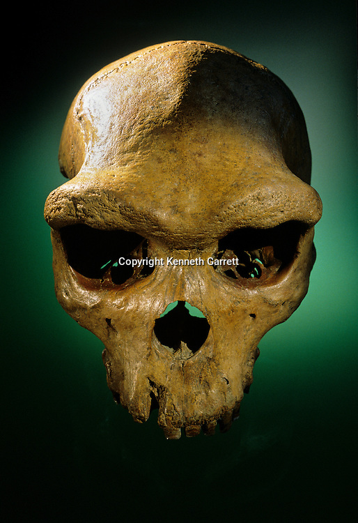 500000 year old skull, Broken Hill, archaic Homo sapiens or Homo rhodesiensis, Zambia, Museum of Natural History, London.
