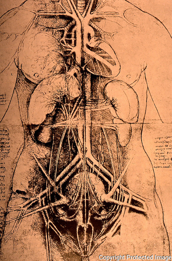 Visual Arts:  Leonardo Drawings--Internal organs of a woman.  Photo '84.