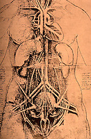 Visual Arts:  Leonardo Drawings--Internal organs of a woman.  Photo '84.