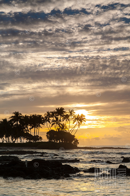 A golden sunset silhouettes palm trees and a rocky shoreline at Pauoa Bay, Big Island.