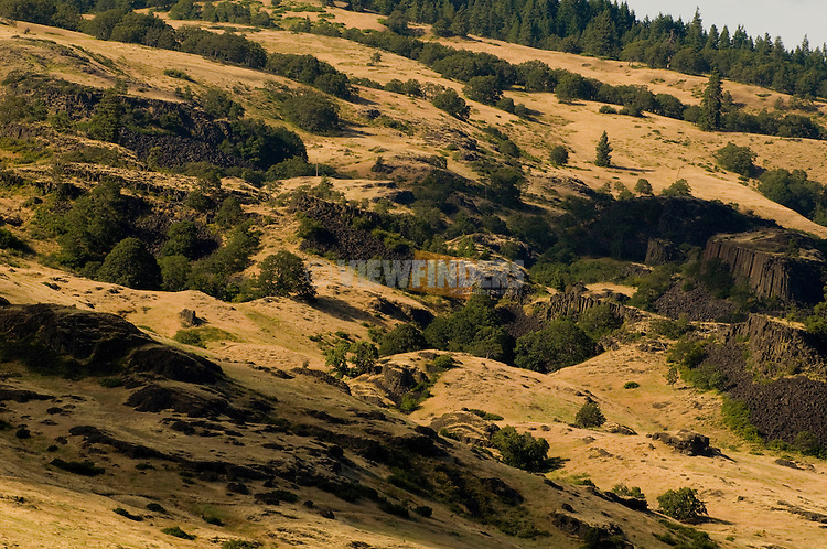Hillside in the Columbia River Gorge, Oregon