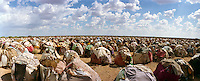 IDP camp is home to thousands of 'drop-outs', semi-nomadic herdsmen who are leaving the bush to come and live in camps near villages as their livestock is decimated by a persistent drought, abandonning their traditional lifestyle.