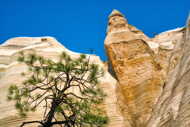 Ponderosa Pine tree silhouetted against rock formation in Tent Rocks National Monument, New Mexico
