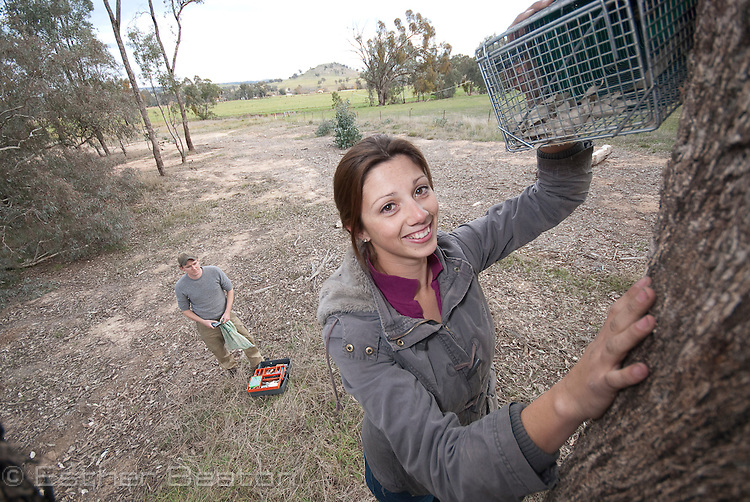 Kylie Soanes, PhD candidate, from University of Melbourne, research assistant Will, trapping Squirrel Gliders, Kyeamba (locality) near Holbrook, New South Wales, Australia