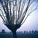Tree near Parma, Italy in Autumn