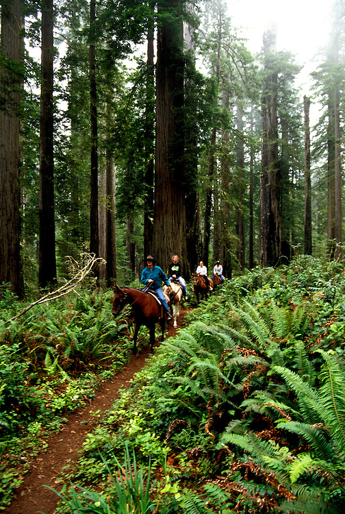 California: Redwood Country.  Horseback Riding in the Redwoods..Photo copyright Lee Foster, 510/549-2202, lee@fostertravel.com, www.fostertravel.com..Photo #: caredw103