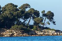 Europe/France/Provence-Alpes-Côte d'Azur/Alpes-Maritimes/Cannes: îIes de Lérins, île de Saint-Honorat // Europe/France/Provence-Alpes-Côte d'Azur/Alpes-Maritimes/Cannes:  Lerins island of Saint Honorat