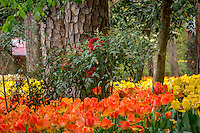 Garvan Woodland Gardens is the botanical garden of the University of Arkansas located in Hop Springs Arkansas and the Ouachita Mountains.