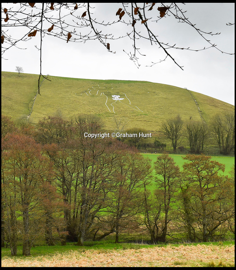 BNPS.co.uk (01202 558833)<br /> Pic: Graham Hunt/BNPS<br /> <br /> The Cerne Abbas Giant at Cerne Abbas in Dorset has had his large manhood covered by a flower for international womens day.