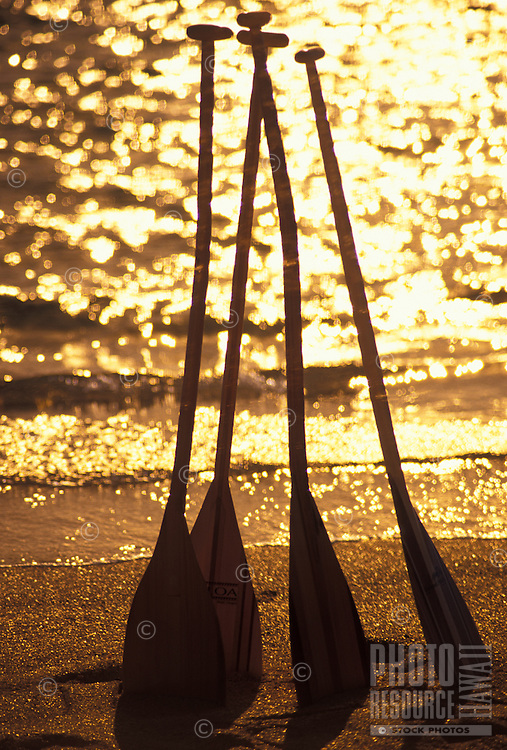 Four outrigger canoe paddles in golden morning light standing erect in the sand