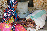 TANZANIA, Zanzibar, village Muungoni, due to climate change and rising water temperatures seaweed farmer have shifted to plant red algae farming in deep water, woman at home with red algae stock, woman Jina Makame