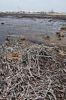 qa705980-D. Once rich mangrove habitat, now lifeless wasteland, thanks to the Bimini Bay Resort. Bahamas, Atlantic Ocean. .Photo Copyright © Brandon Cole. All rights reserved worldwide.  www.brandoncole.com..This photo is NOT free. It is NOT in the public domain. This photo is a Copyrighted Work, registered with the US Copyright Office. .Rights to reproduction of photograph granted only upon payment in full of agreed upon licensing fee. Any use of this photo prior to such payment is an infringement of copyright and punishable by fines up to  $150,000 USD...Brandon Cole.MARINE PHOTOGRAPHY.http://www.brandoncole.com.email: brandoncole@msn.com.4917 N. Boeing Rd..Spokane Valley, WA  99206  USA.tel: 509-535-3489