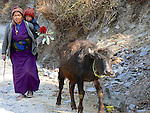 A woman with a young child strapped to her back walks along a mountain pathway with her yak