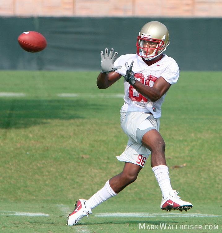 Joslin Shaw, a senior wide receiver from Plant City, catches a pass on the second day of FSU football practice August 8, 2007.  (Mark Wallheiser/TallahasseeStock.com)