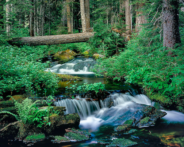 Waterfall in Cascade Mountains, Elkhorn, Oregon .  John leads private photo tours throughout Colorado. Year-round Colorado photo tours. .  John offers private photo tours throughout the western USA, especially Colorado. Year-round.