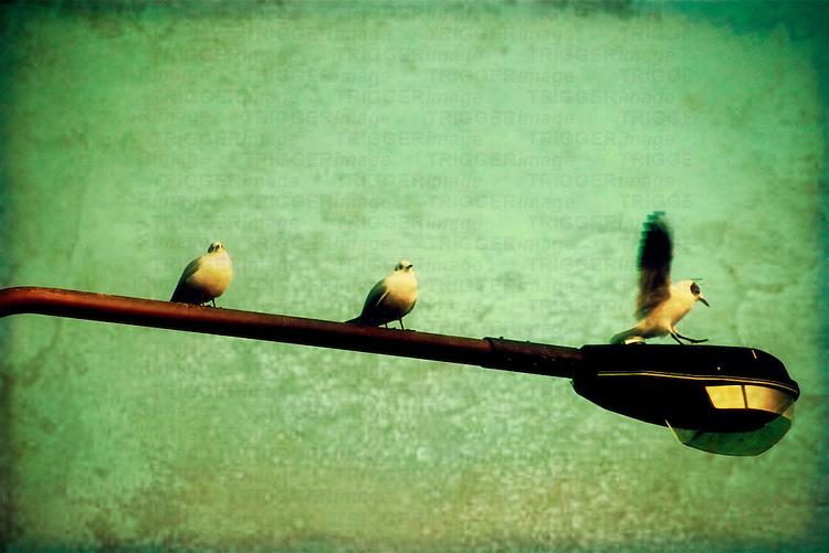 Three birds sitting on a street light