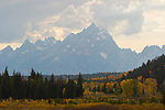 Golden aspen and cottonwood groves scattered among conifers adorn the valley of Pacific Creek below the towering Tetons on an Indian summer day in Grand Teton National Park, Wyoming..