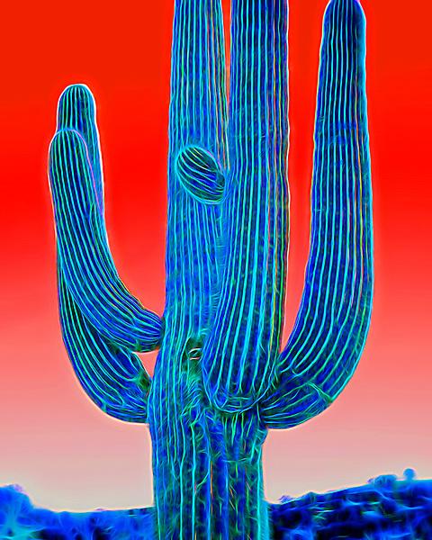 Saguaro #34