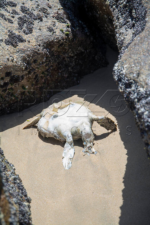 Tartaruga morta na Praia do Sono, Paraty - RJ, 01/2016.